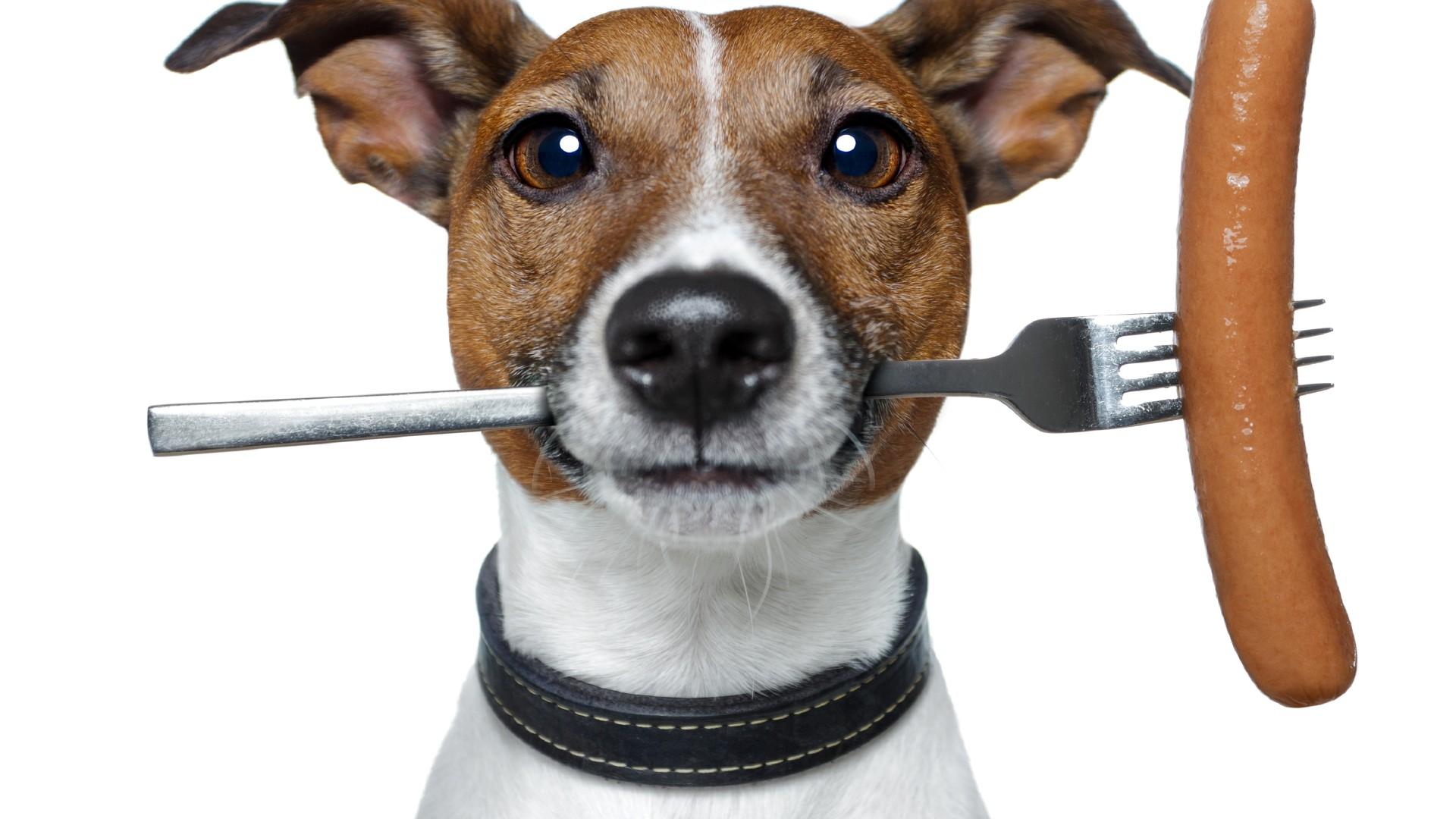 Що для собак краще сухий або натуральний корм?